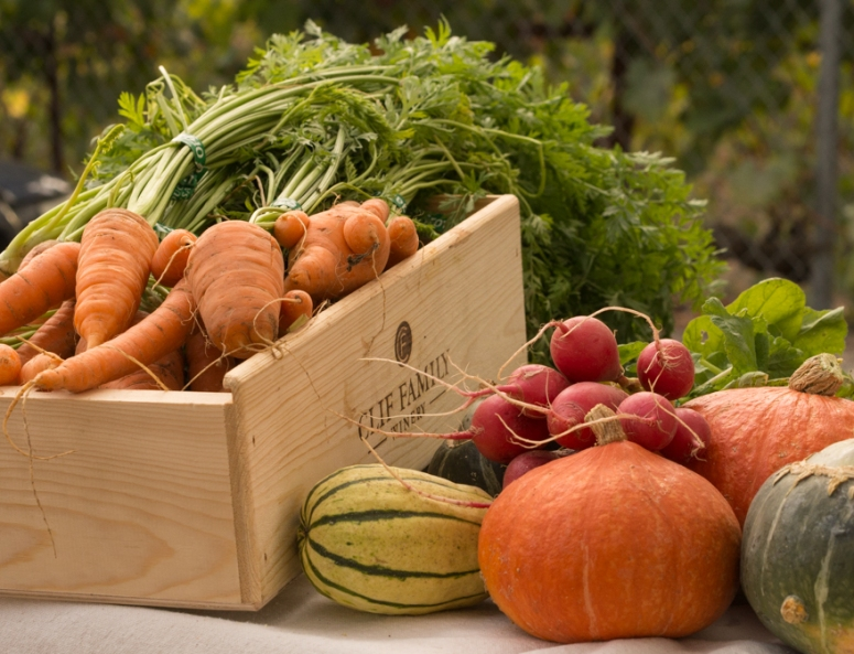 Autumn Vegetables from the Clif Family Farm