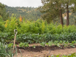Leafy Greens and Quinoa at Clif Family Farm