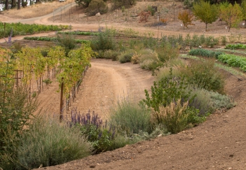 Vines and Protective Species at Clif Family Farm