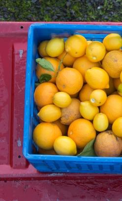 Featured Image for Meyer Lemon Olive Oil Cake